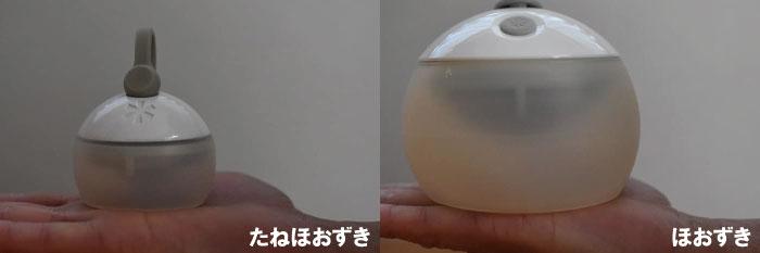 ほおずきとたねほおずきの大きさの違いを比較