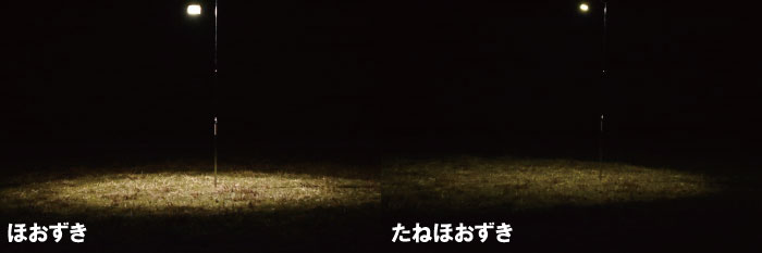 ほおずきとたねほおずきの明るさの違いを比較