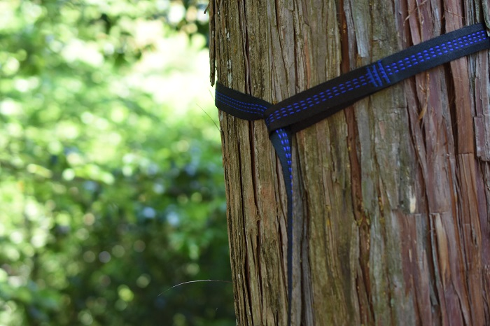 木からずり落ちない