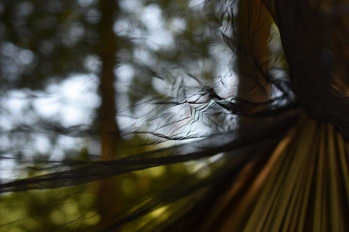 蚊帳の中から撮った写真