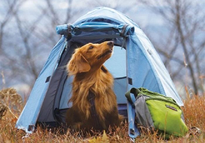 ゆるキャン△で斉藤さんの愛犬ちくわが使用していたテントは?