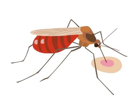 キャンプ最強の蚊取り線香比較